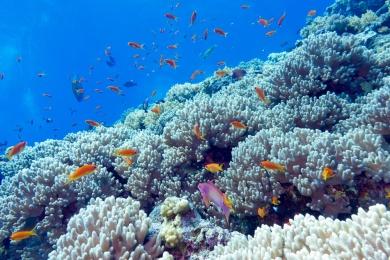 Što čini kremu za sunčanje sigurnom za koralje?